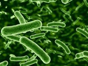 gut-bacteria-prebiotics